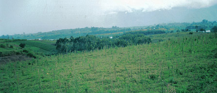 Scenic view at Kagadi