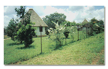 Cottages at the African Village Guest Farm